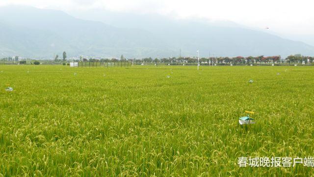 洱海周边试点发展有机农业 抑制面源污染