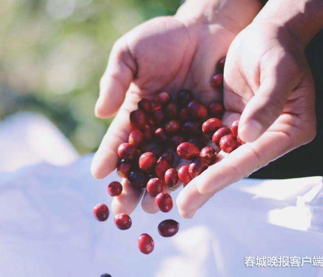 小粒咖啡-有水印1